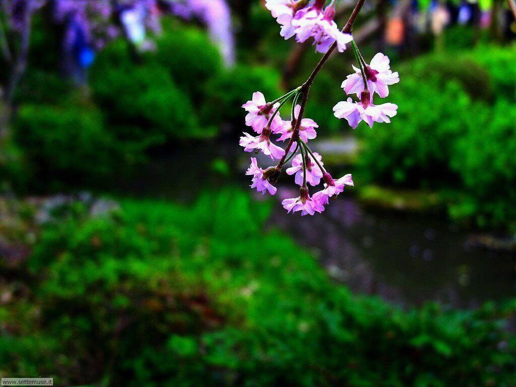 Foto desktop della stagione primavera 076