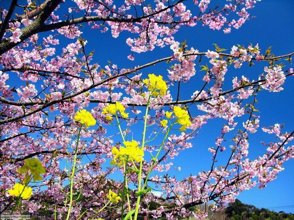 Foto primavera per sfondi desktop for Immagini primavera desktop