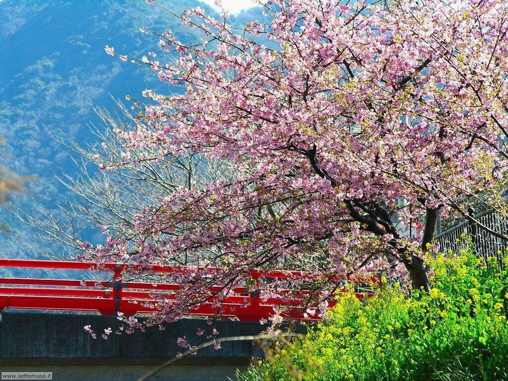Foto desktop della stagione primavera 078