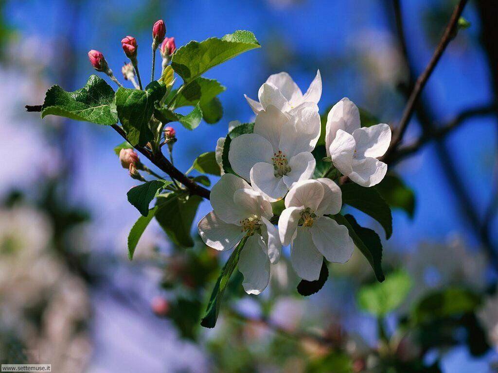 Foto desktop della stagione primavera 079