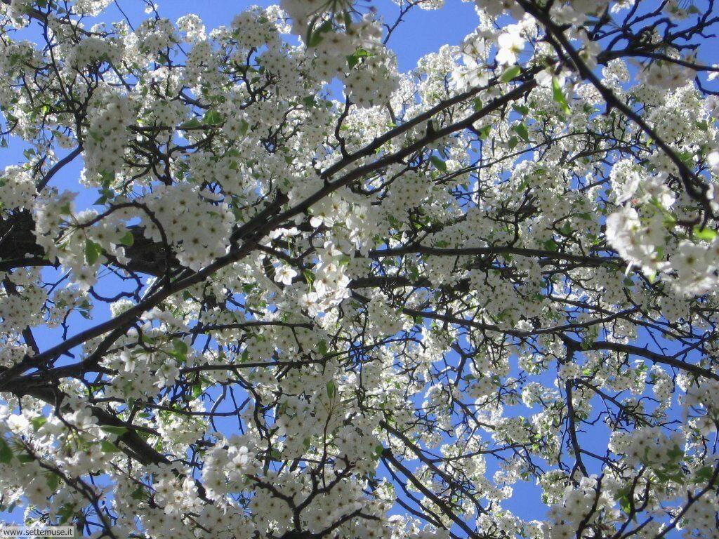Foto desktop della stagione primavera 080