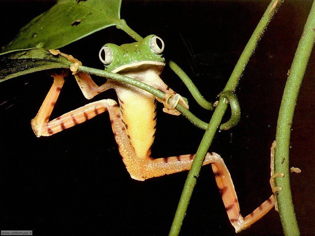 foto di rane e rospi per sfondi