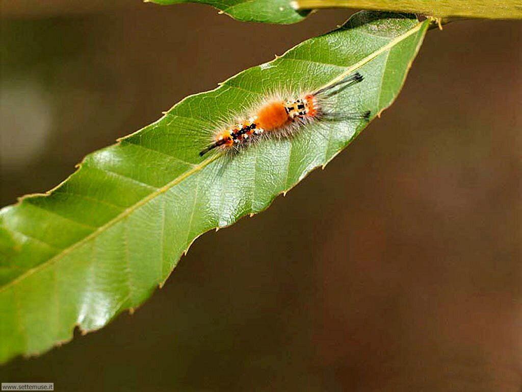 Foto sfondi di Bruchi e larve 032