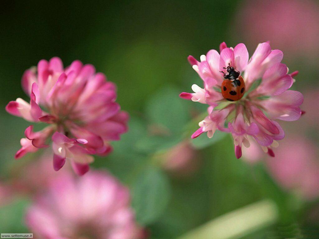 blumen in flowerpix image - photo #30