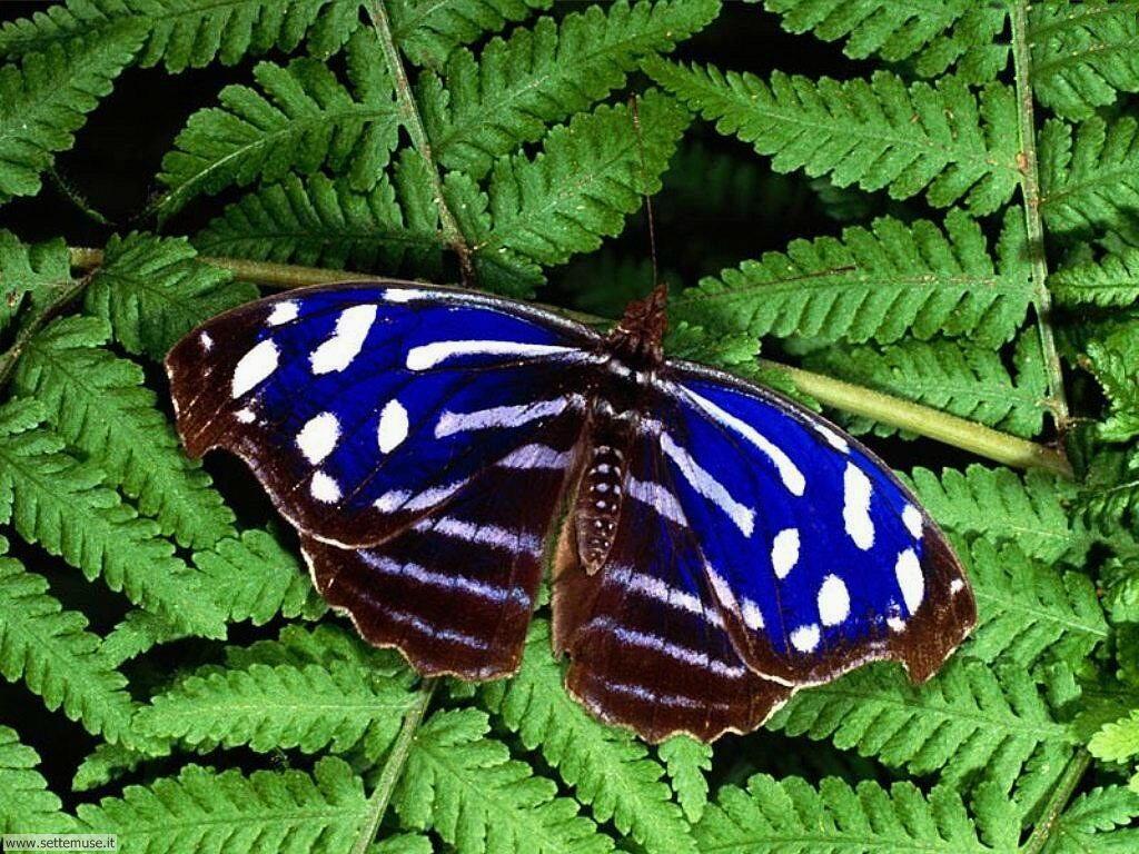 Foto di Farfalle 005