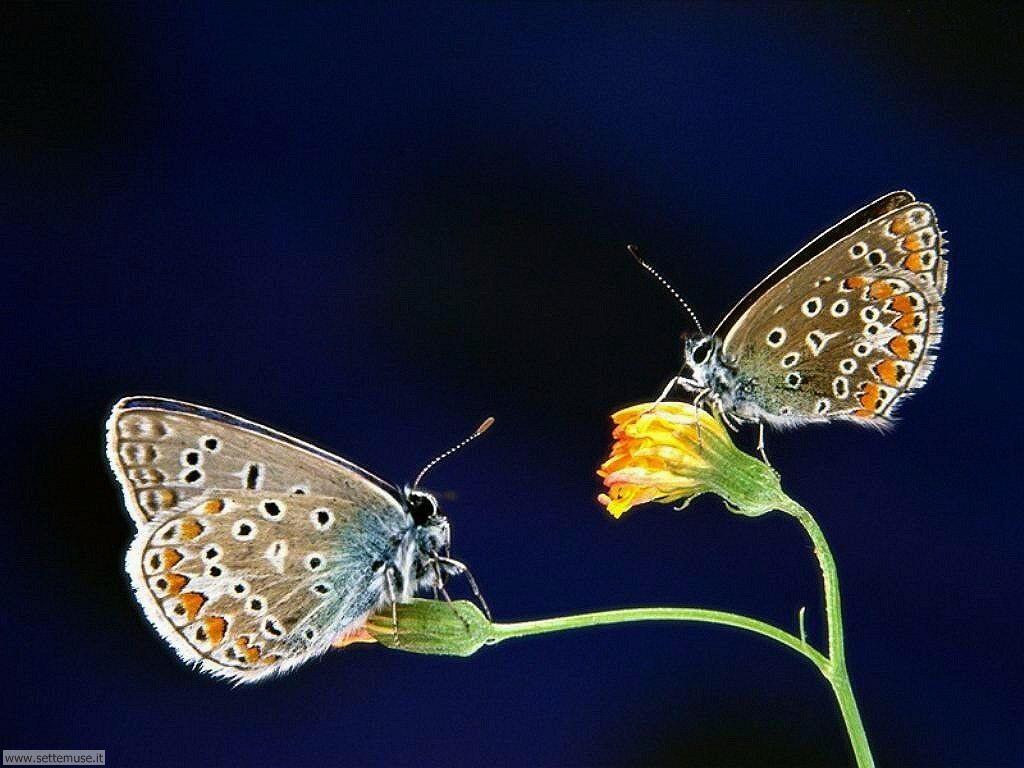 Foto di Farfalle 006