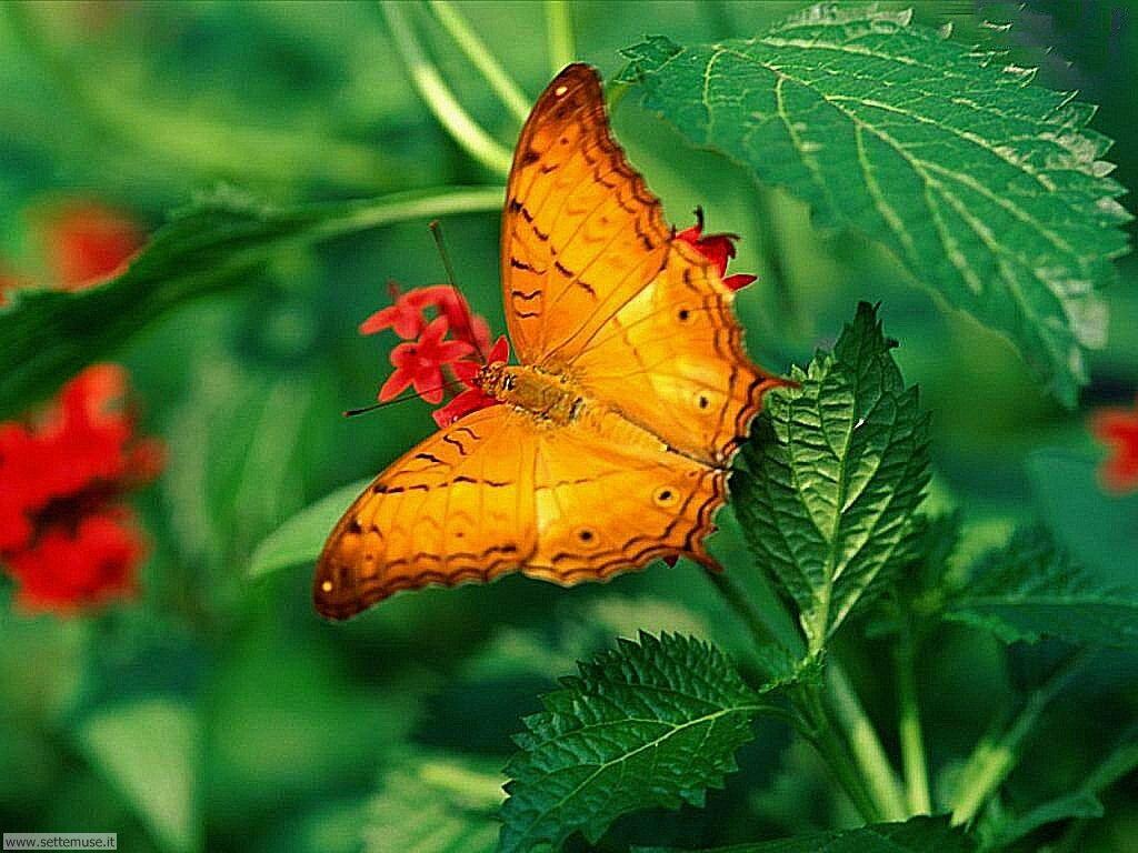 Foto di Farfalle 007