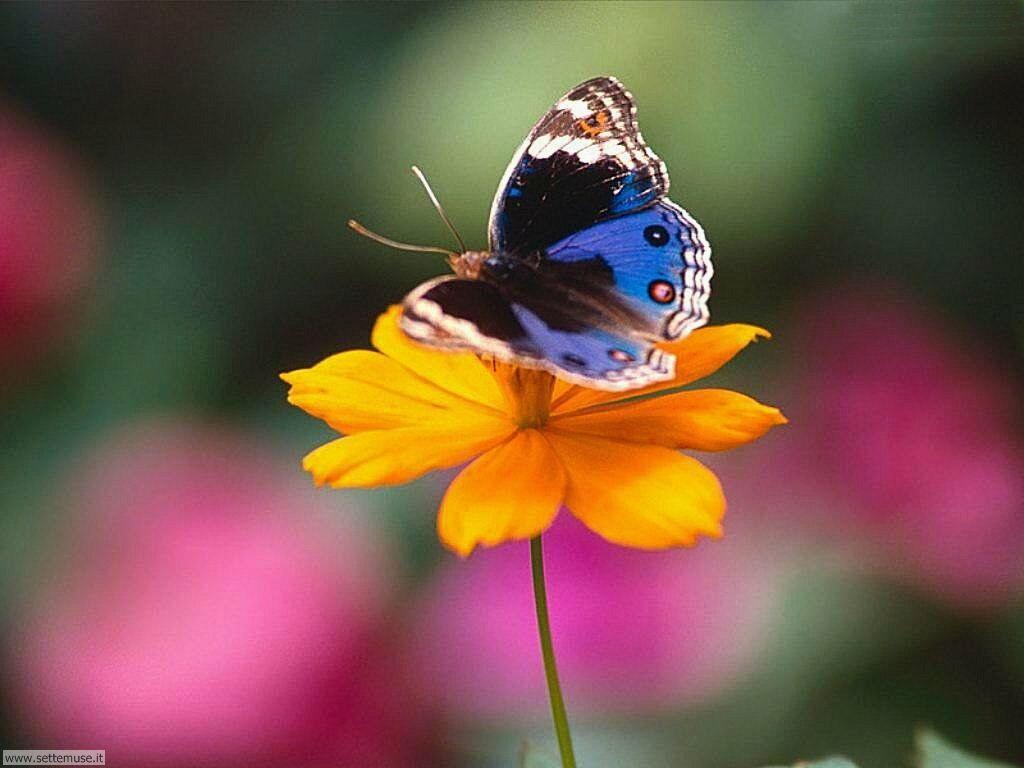 Foto di Farfalle 009