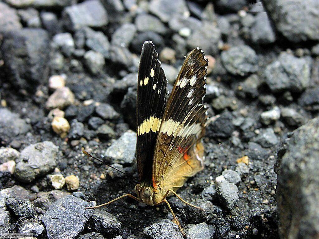 Foto di Farfalle 012