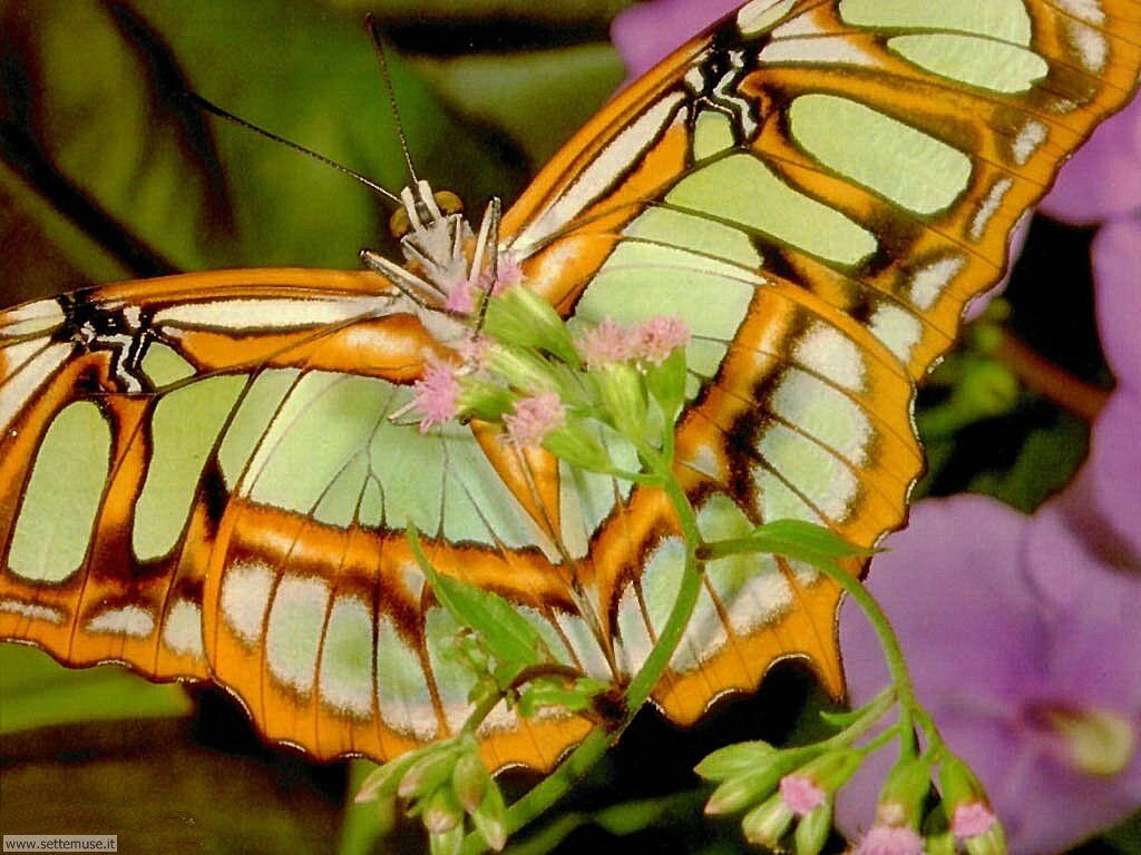 Foto di Farfalle 017
