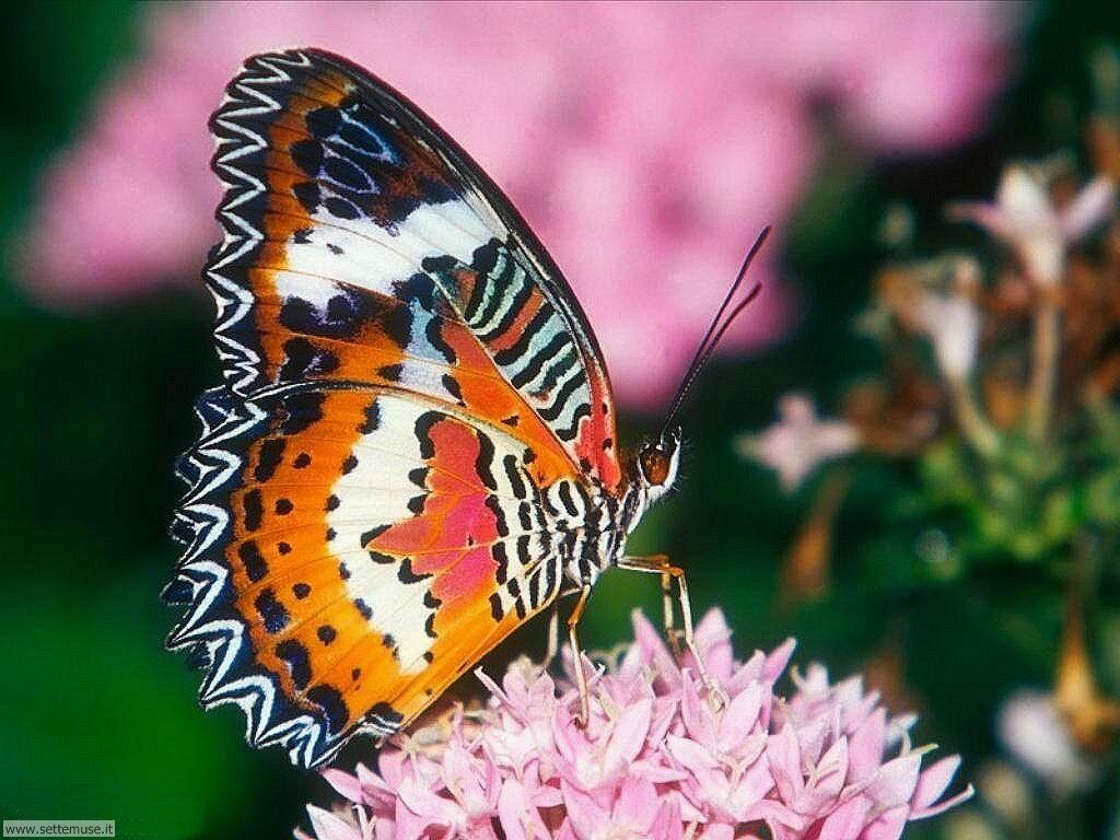 Foto di Farfalle 019