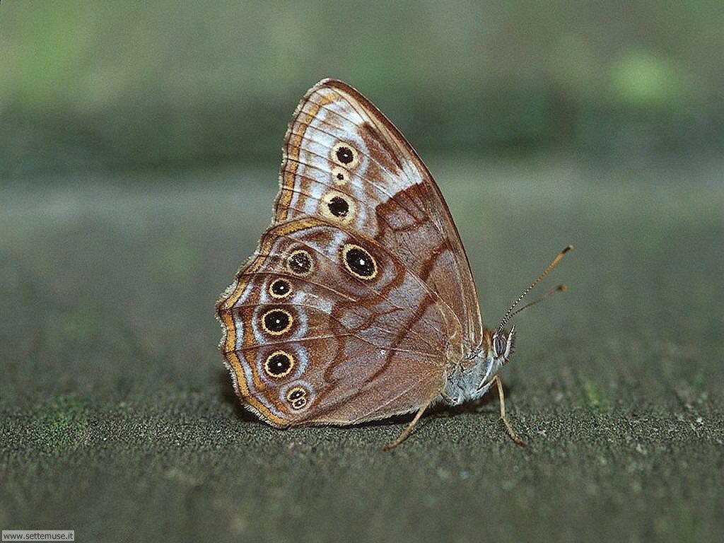 Foto di Farfalle 029