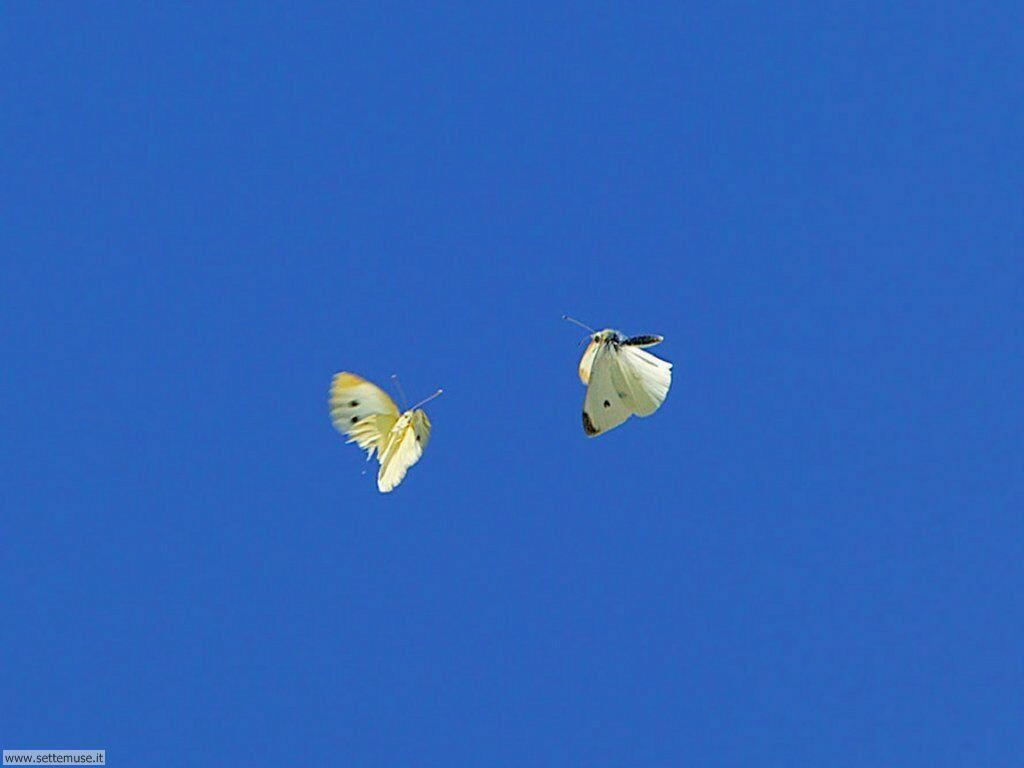 Foto di Farfalle 047