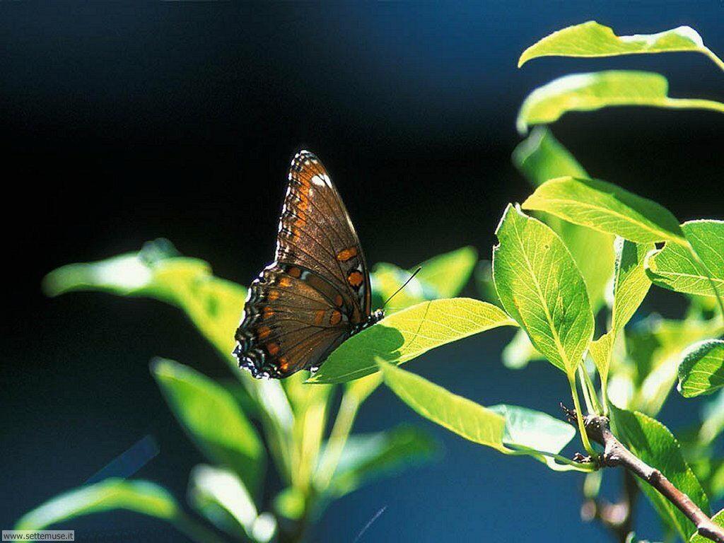 Foto di Farfalle 049