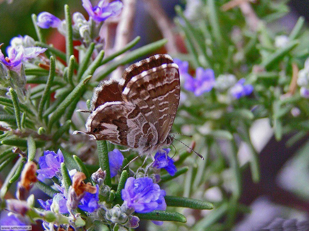 Foto di Farfalle 054