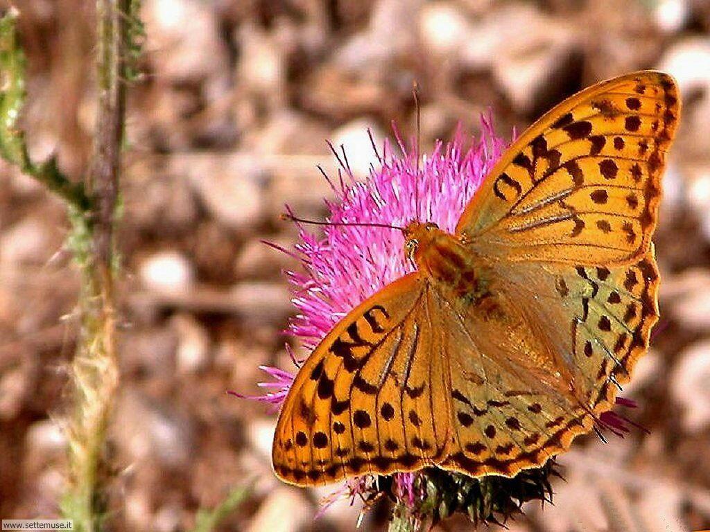 Foto di Farfalle 056