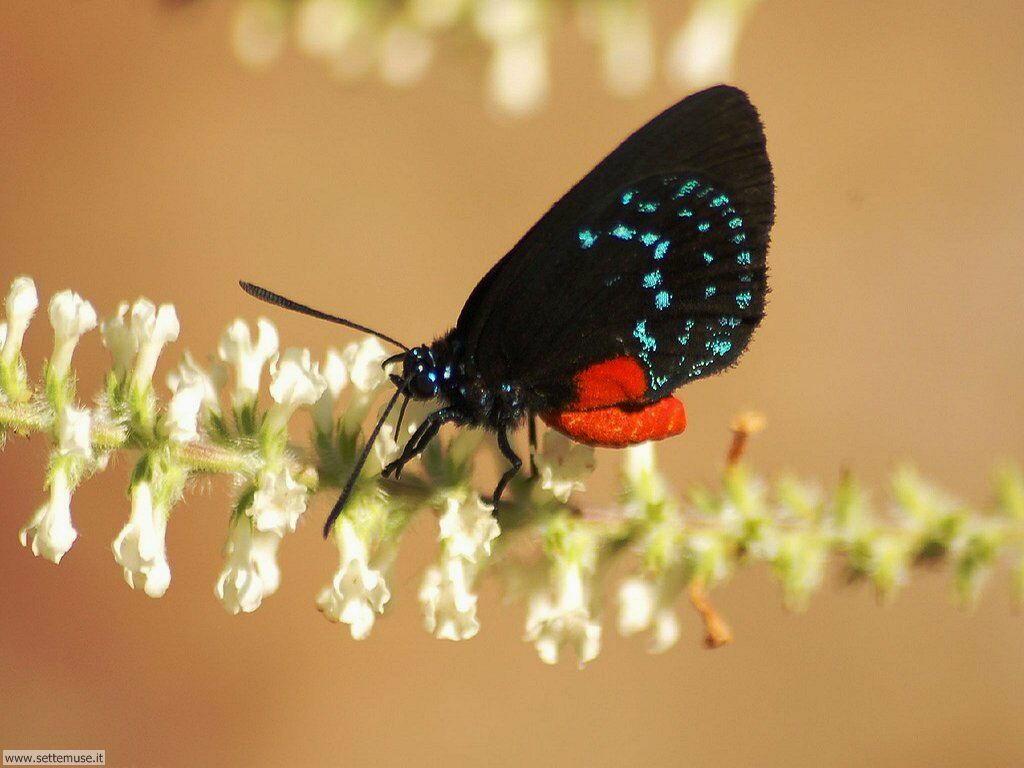 Foto di Farfalle 059