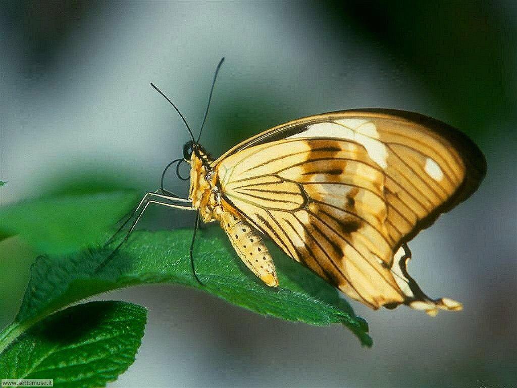 Foto di Farfalle 083