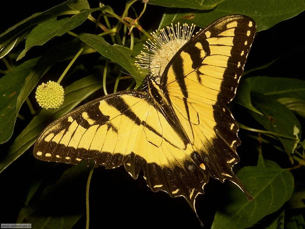 Foto di Farfalle 2-001