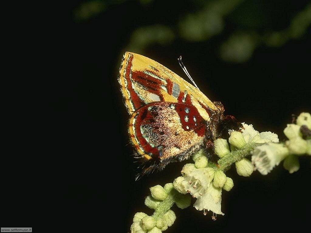 Foto di Farfalle 2-003