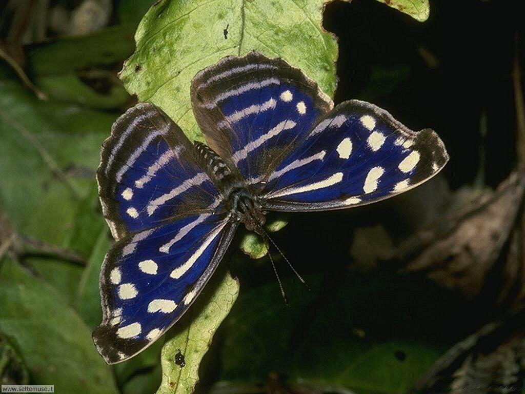 Foto di Farfalle 2-005