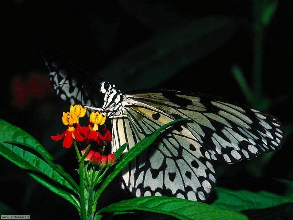 Foto di Farfalle 2-007