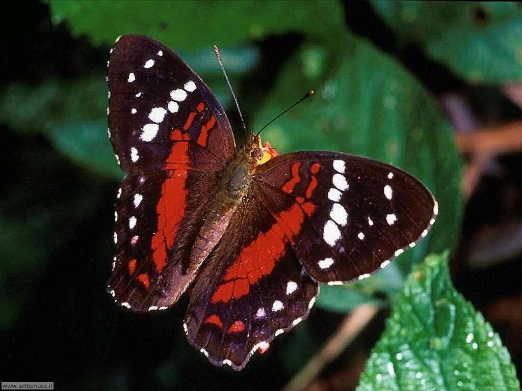 Foto di Farfalle 2-009