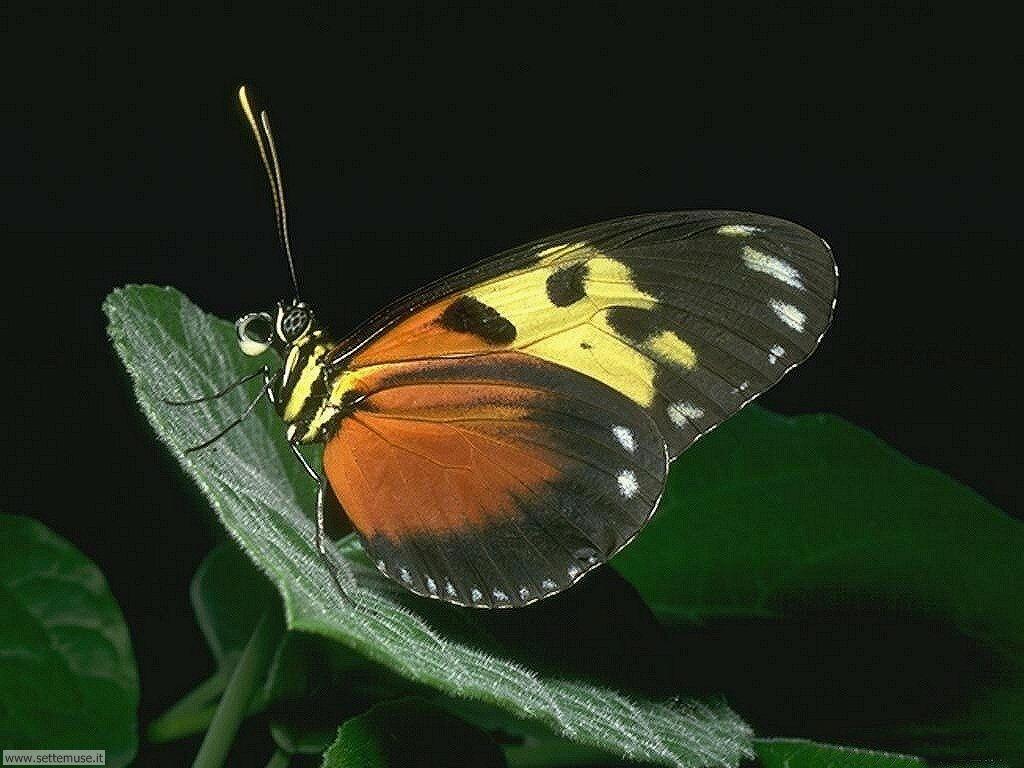 Foto di Farfalle 2-010