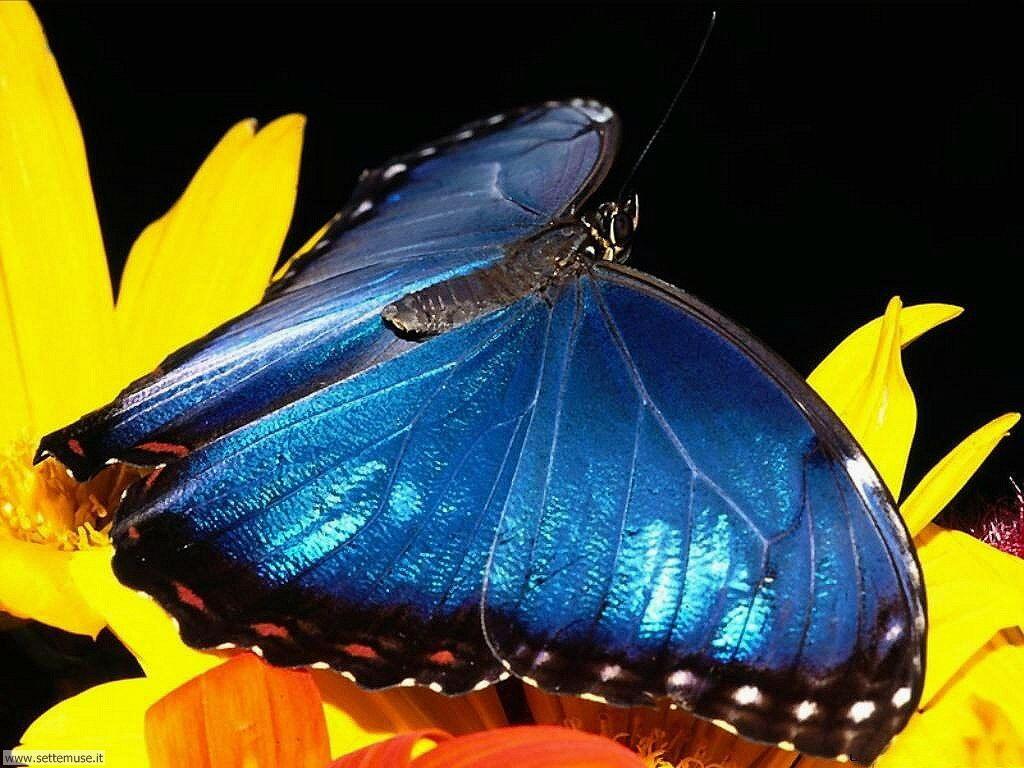 Foto di Farfalle 2-011