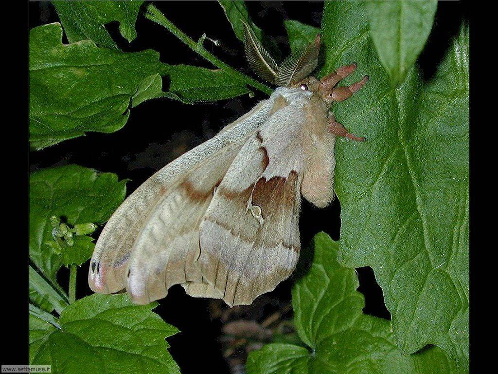 Foto di Farfalle 2-017