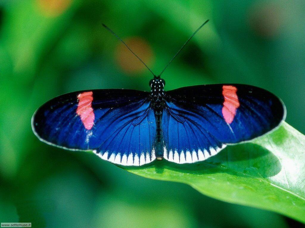 Foto di Farfalle 2-020