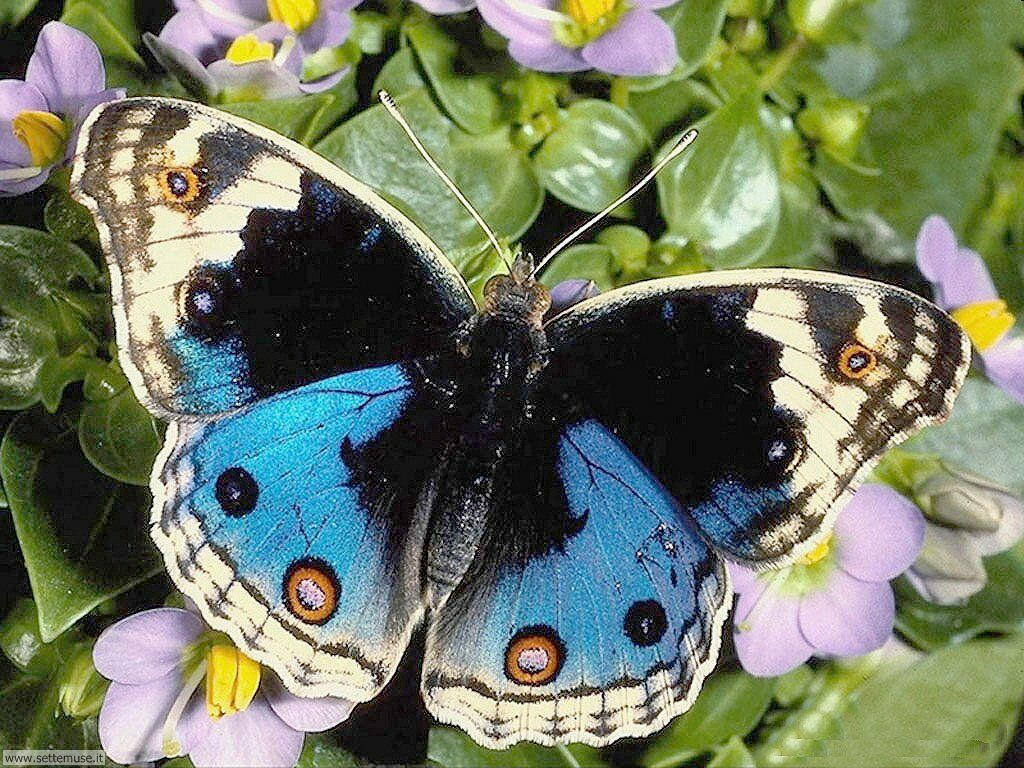 Foto di Farfalle 2-022