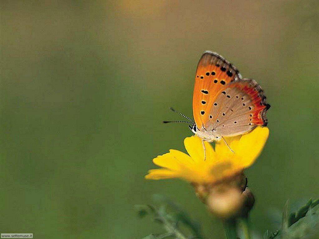 Foto di Farfalle 2-024