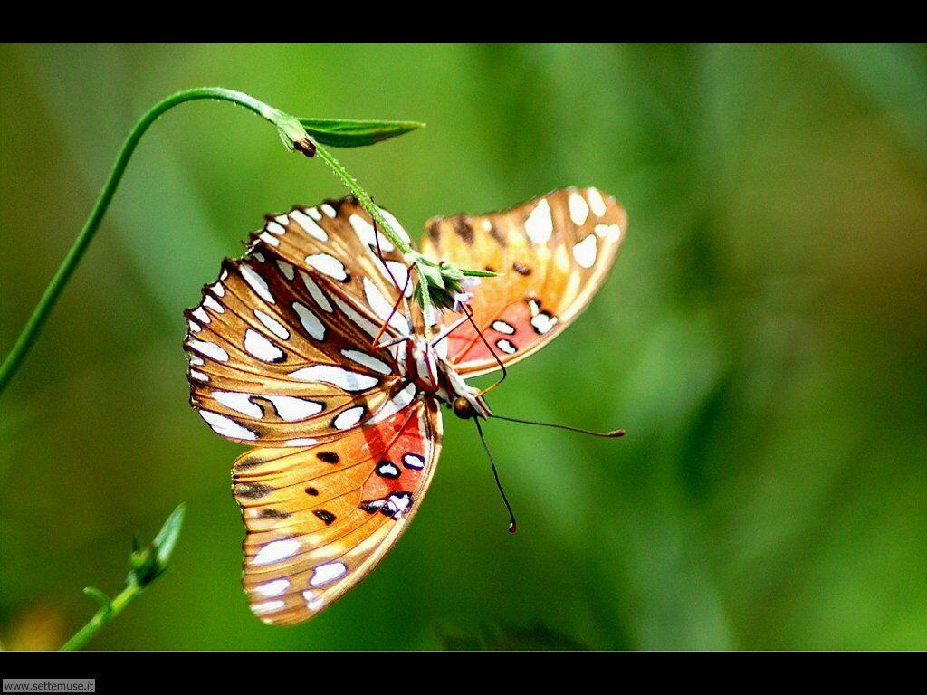 Foto di Farfalle 2-026