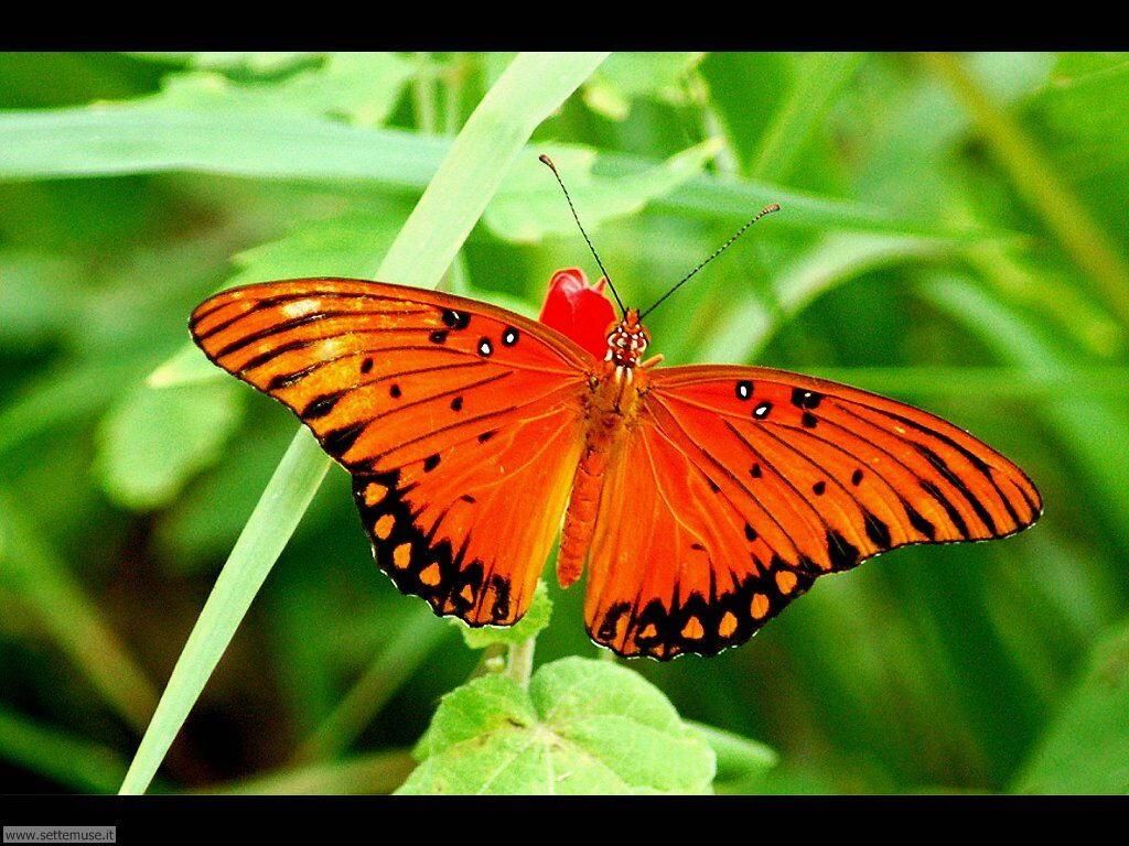 Foto di Farfalle 2-027