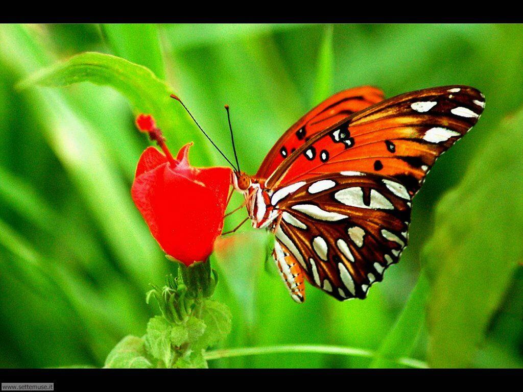 Foto di Farfalle 2-028