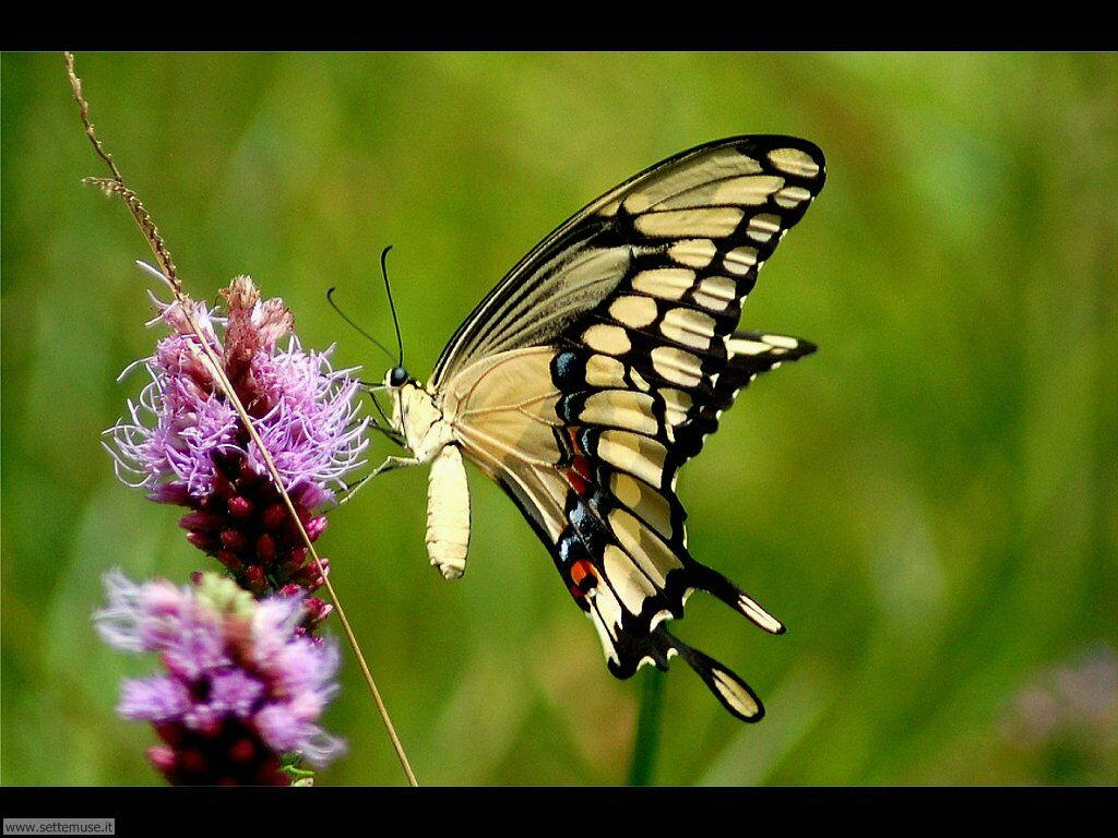 Foto di Farfalle 2-030