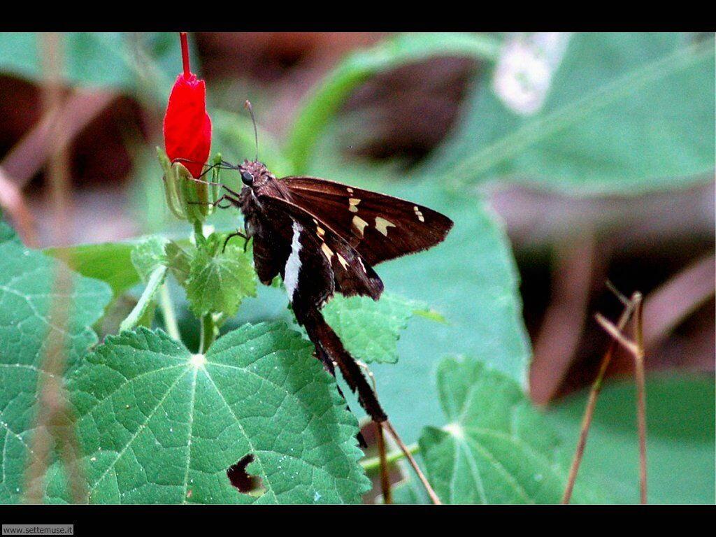 Foto di Farfalle 2-031