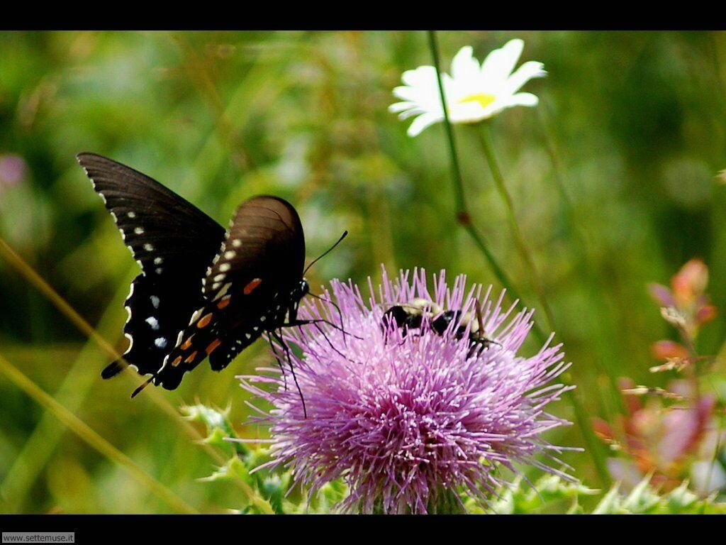 Foto di Farfalle 2-035