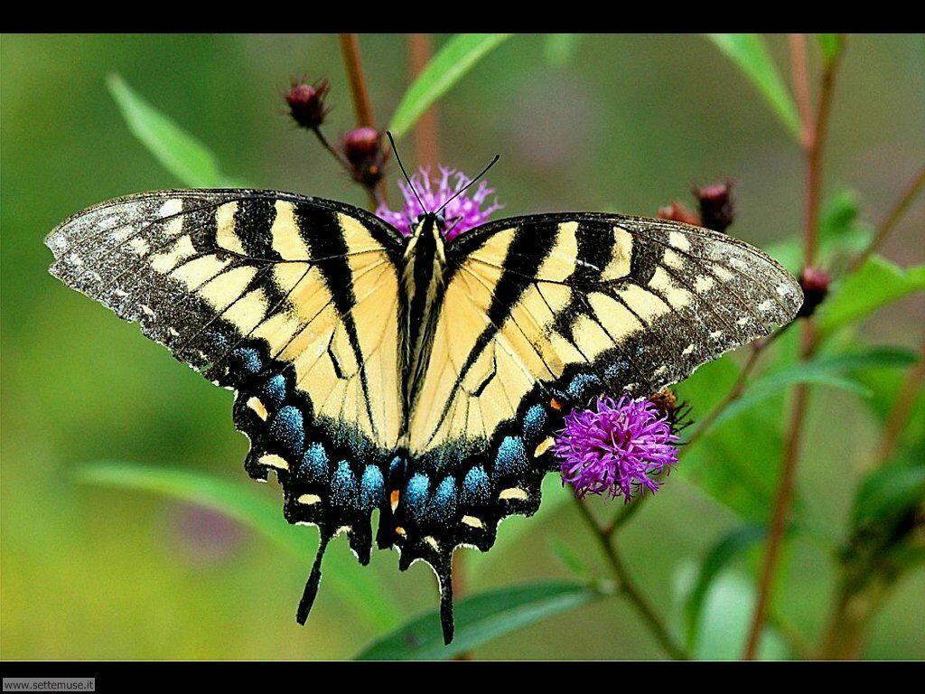 Foto di Farfalle 2-039