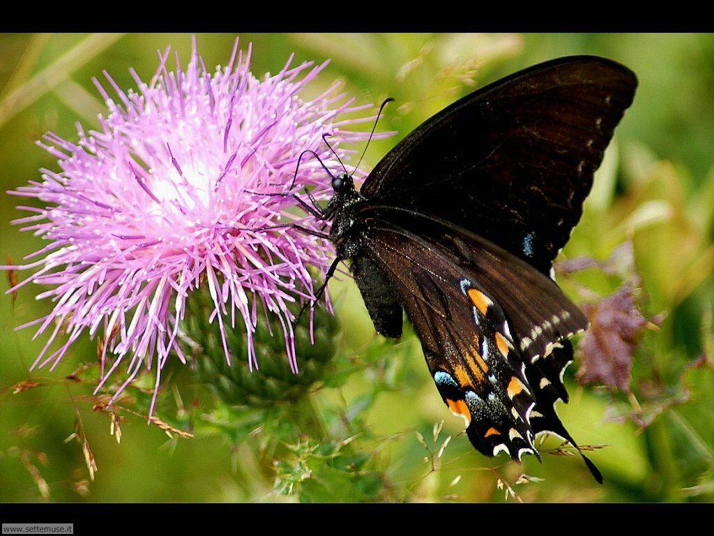Foto di Farfalle 2-041