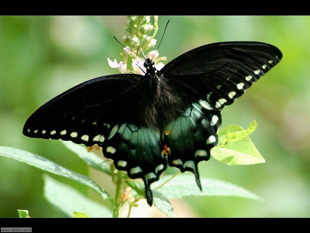 Foto di Farfalle 2-042