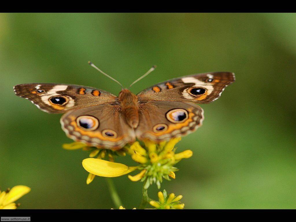 Foto di Farfalle 2-047