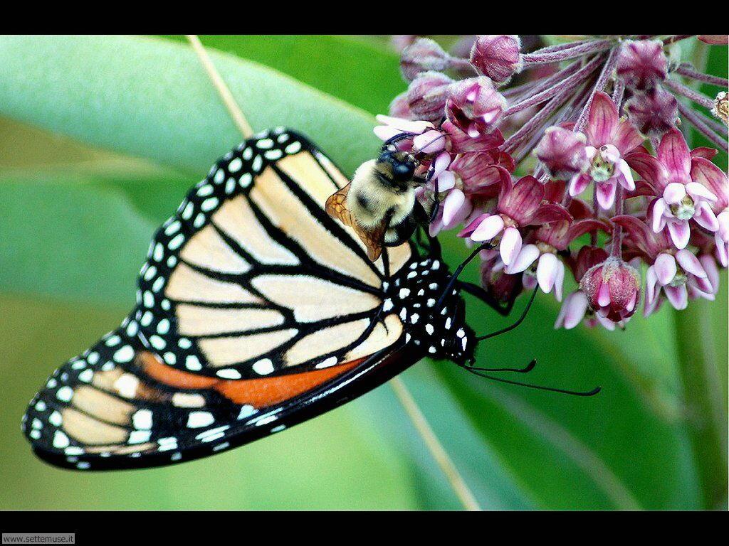 Foto di Farfalle 2-048