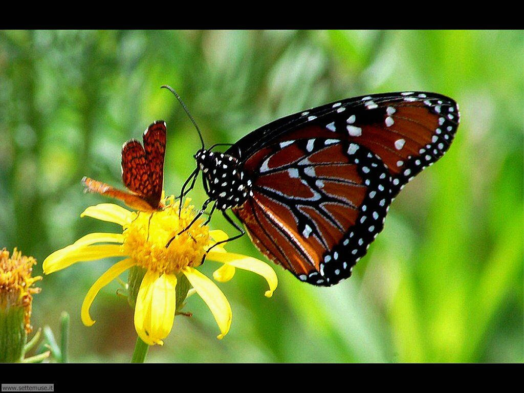 Foto di Farfalle 2-052