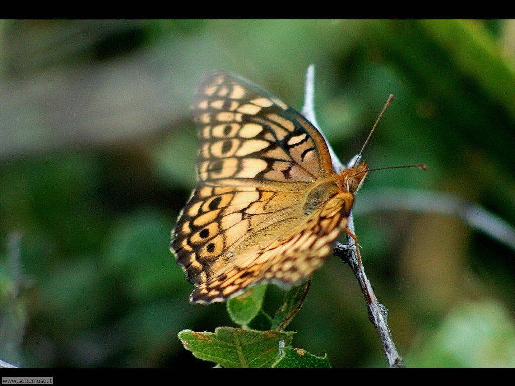 Foto di Farfalle 2-054