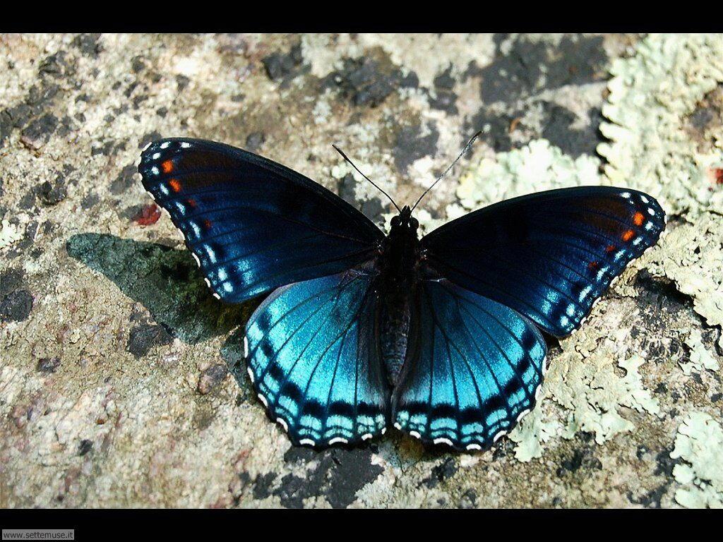 Foto di Farfalle 2-055