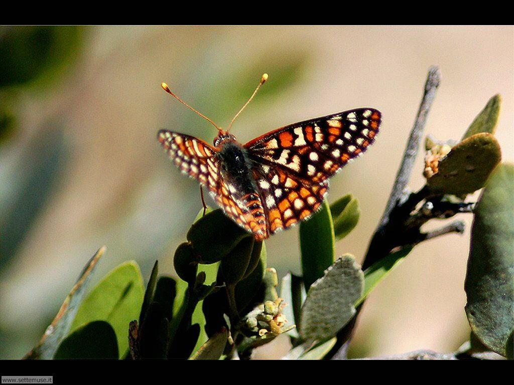 Foto di Farfalle 2-056
