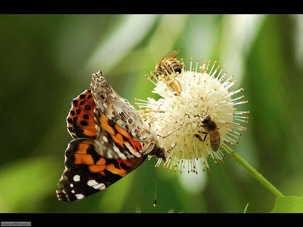 Foto di Farfalle 2-058