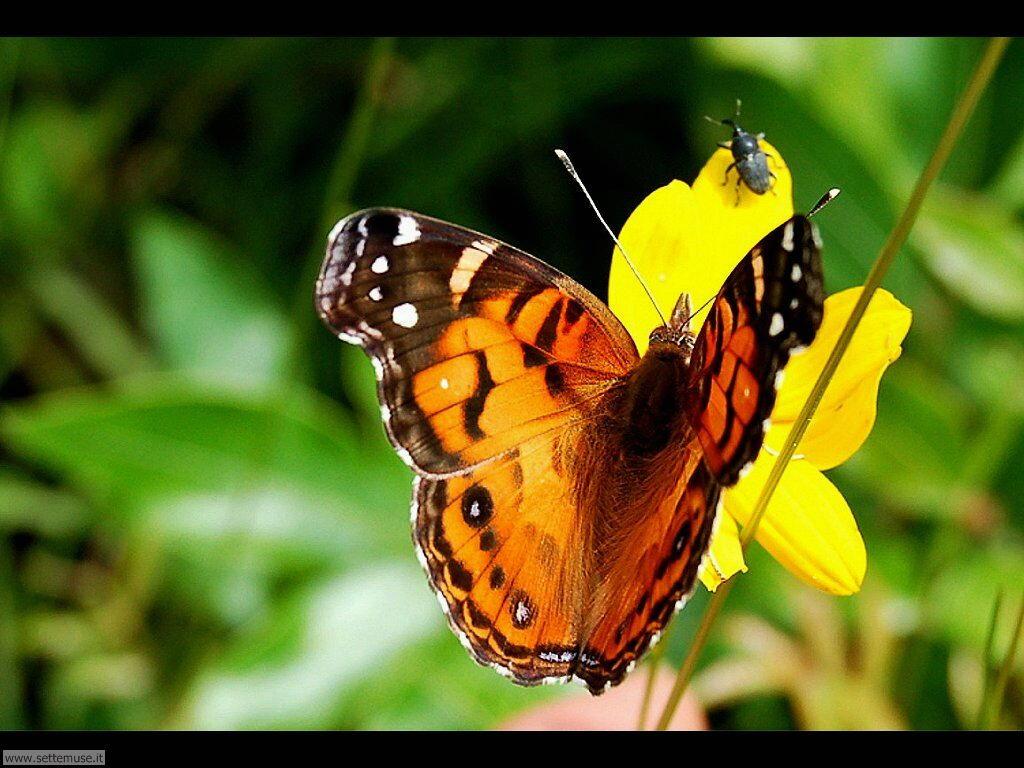 Foto di Farfalle 2-059